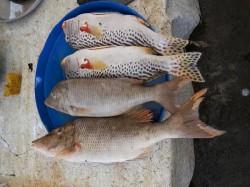 Tavira - Fish Gastronomy Tour by @ Ramon F Velasquez @ Wikimedia.org